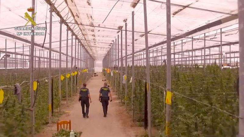 Una de las plantaciones de la banda, en una imagen de la Guardia Civil. EFE