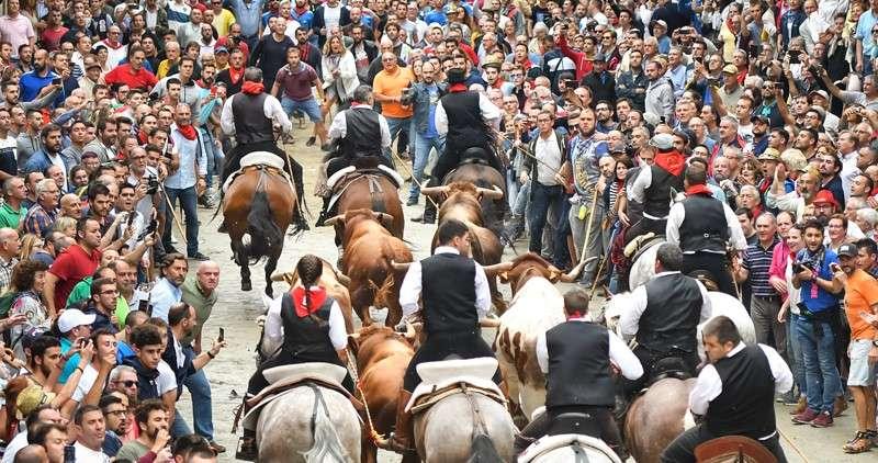 Entrada de toros y caballos. Foto: I.Ferrera