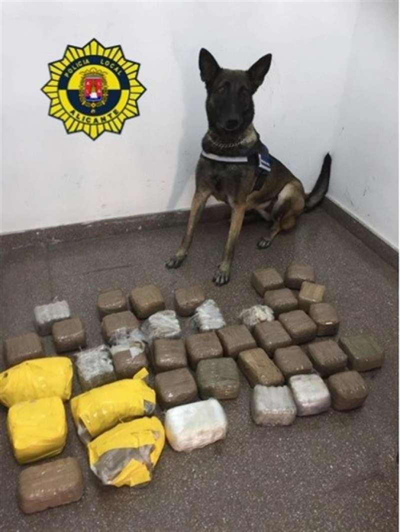 Una imagen del perro que ha localizado el alijo facilitada por la Policía Local de Alicante. EFE