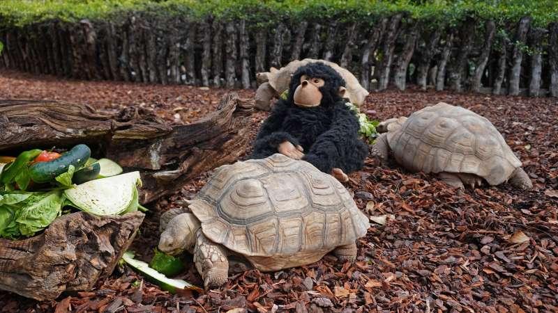 La mascota con dos tortugas de Bioparc
