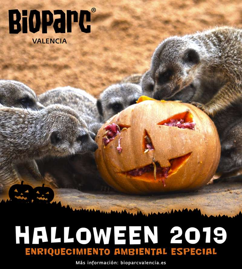 Cartel Halloween 2019 en el BIOPARC -EPDA