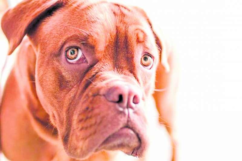 Los ruidos afectan mucho a los perros./ FOTO ROCÍO RAGA WICHI