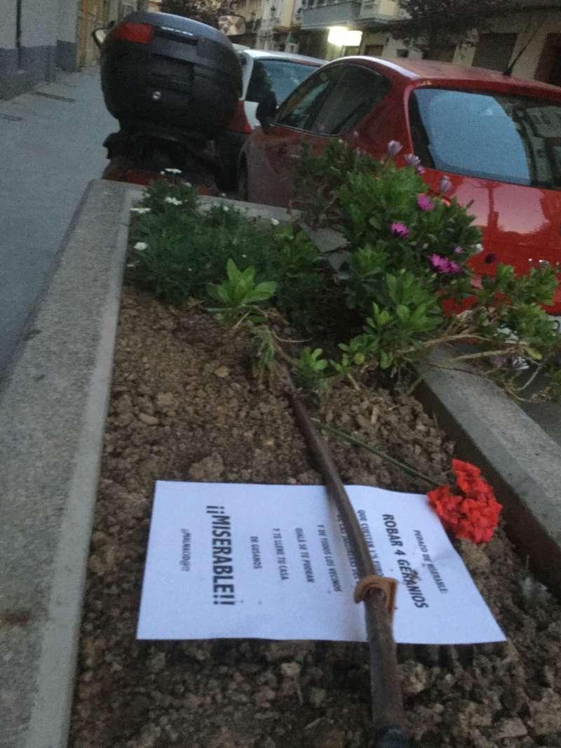 Jardinera de donde han robado otros dos geranios -sólo queda la flor de uno-. FOTO EPDA