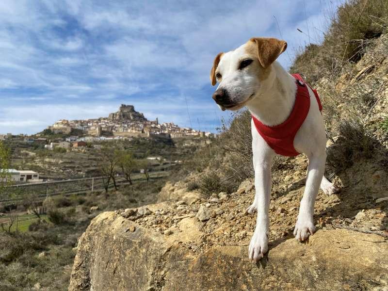 Pipper, el perro influencer / EPDA