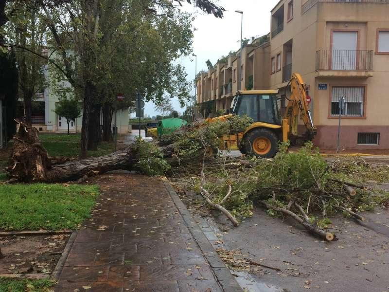 Árbol caído en La Pobla de Farnals. EPDA