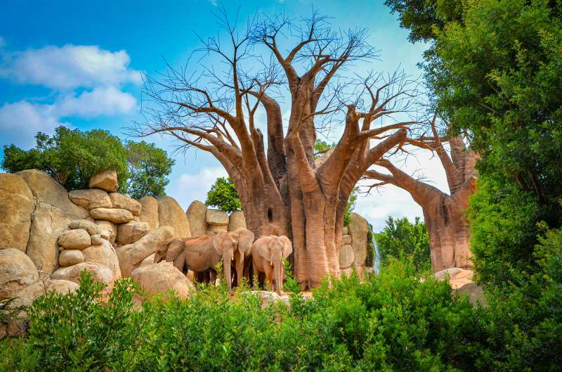Elefantes en la sabana africana de BIOPARC Valencia . EPDA