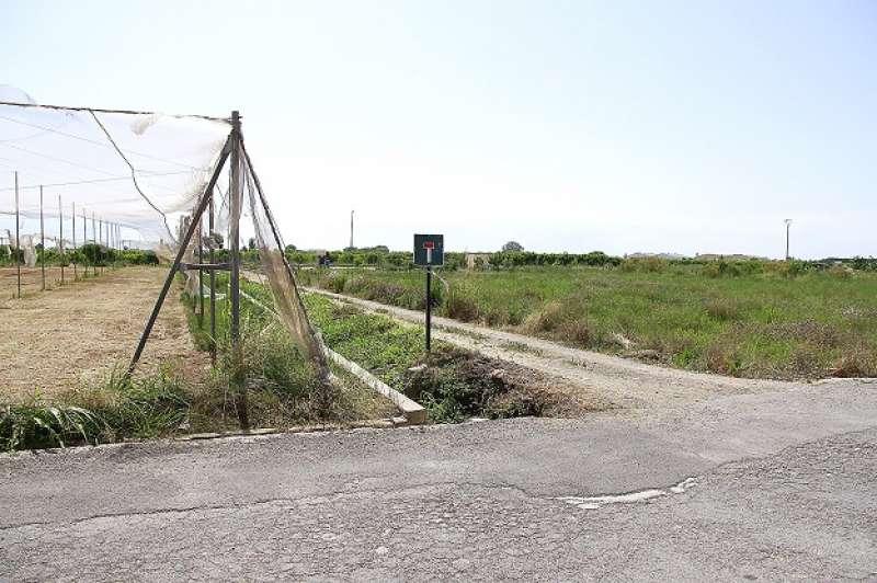 Camps perduts a Puçol. EPDA