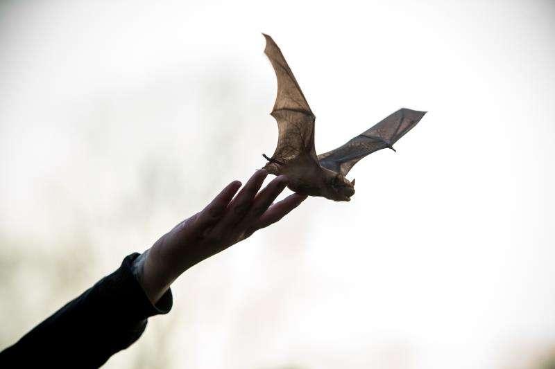 Un murciélago en una imagen de archivo. EFE