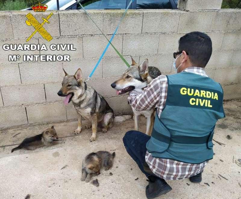 Un agente de la Guardia Civil con dos de los perros sustraídos.
