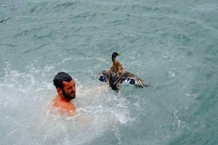 Tradicional suelta patos al mar en Puerto Sagunto, 15 de agosto. Foto: EPDA