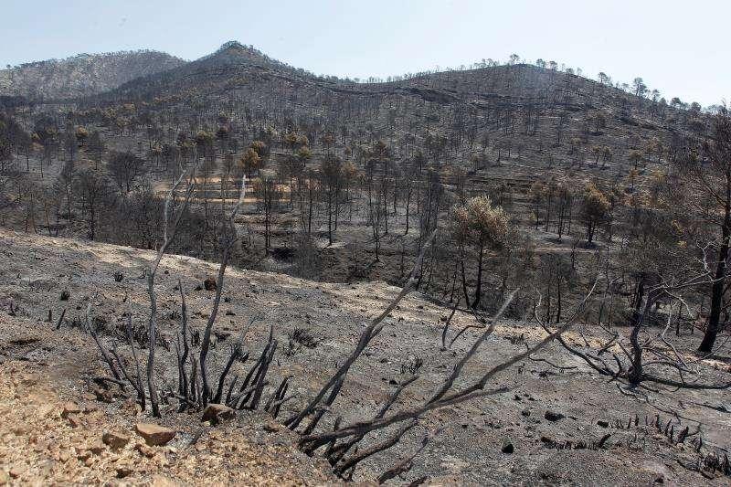 Una de las zonas afectadas por el incendio forestal de Beneixama (Alicante) del pasado 15 de julio. EFE