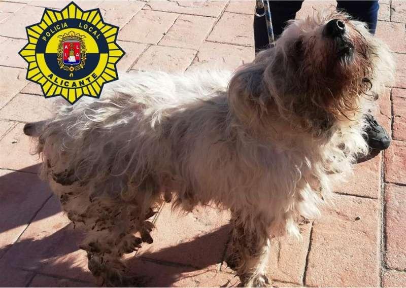 Imagen proporcionada por la Policía Local de uno de los perros rescatados. - EFE