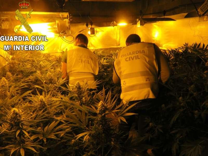 La Guardia Civil desmantela un cultivo de 2000 plantas de marihuana ocultas en dos viviendas de La Pobla de Vallbona