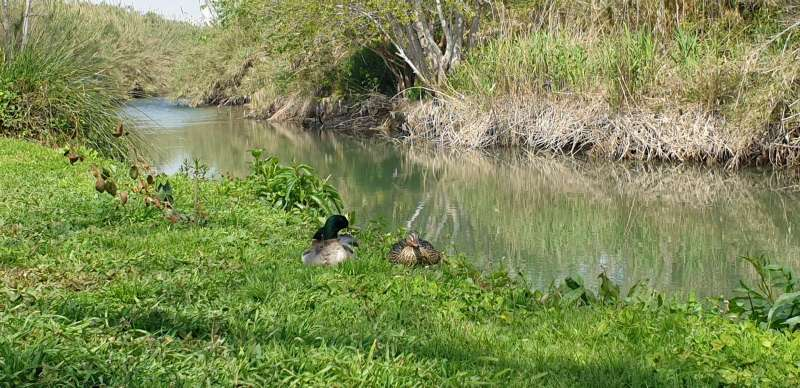 Fauna y flora en la ribera del río Turia.