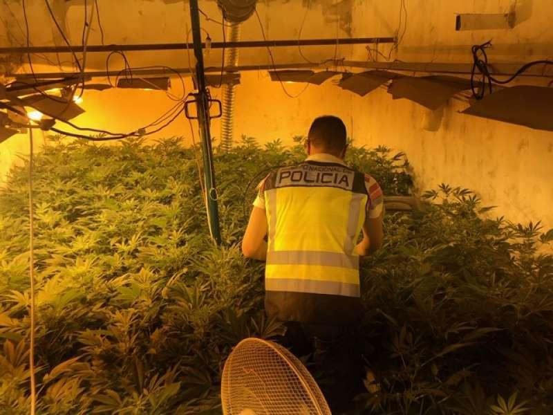 Cultivo de marihuana . POLICIA NACIONAL