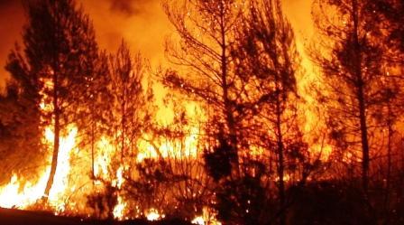 Incendio de Andilla. Foto EPDA