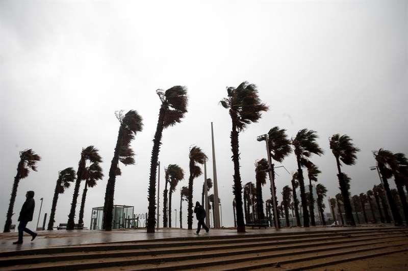 Palmeras de un paseo marítimo agitadas por el viento. EFE