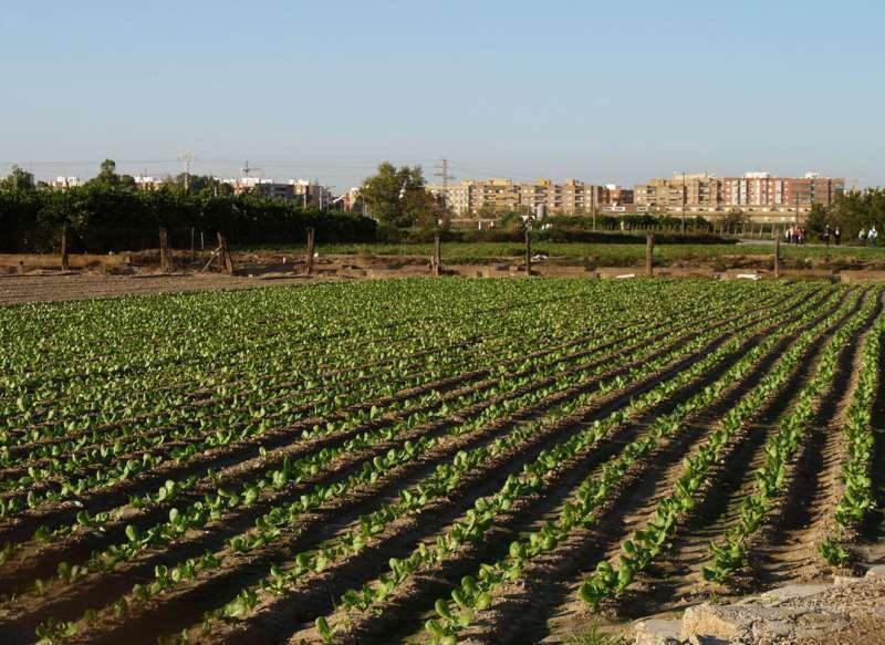 Imagen archivo de un campo de cultivo en València. -EPDA