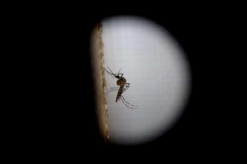 El mosquito de la variedad