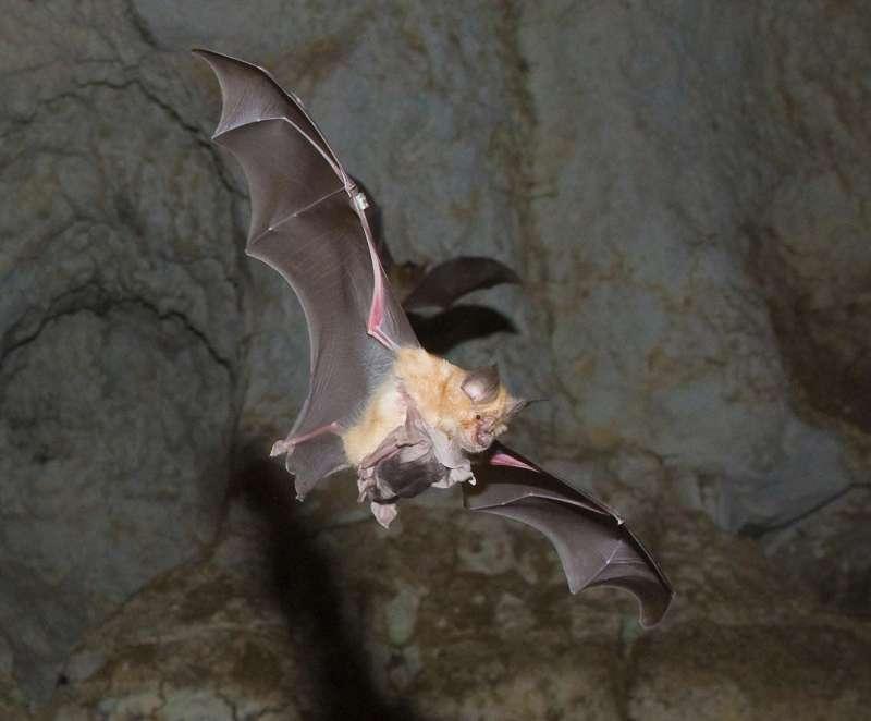 +1? para a salvar a los murciélagos