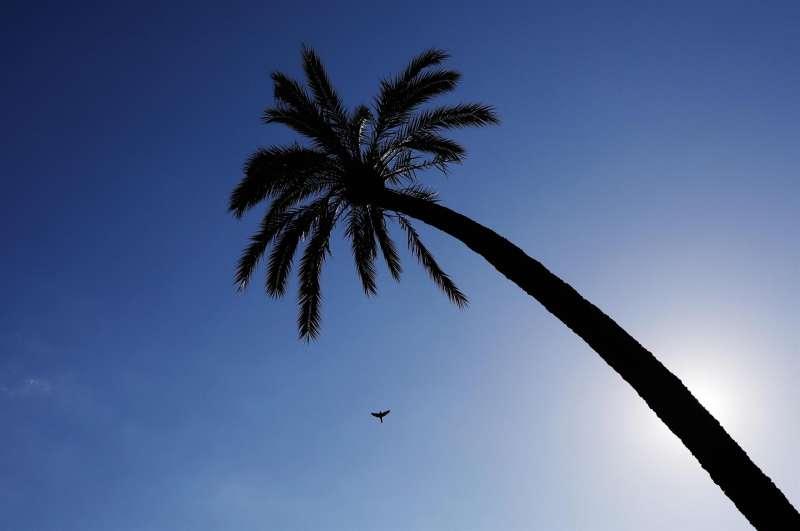 Un ave cruza el cielo despejado de la Comunidad Valenciana.