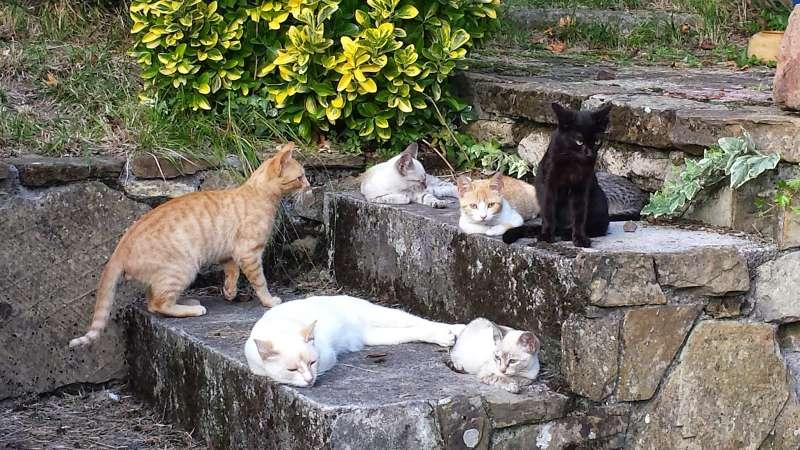 Gátova inicia una campaña de control de colonias felinas