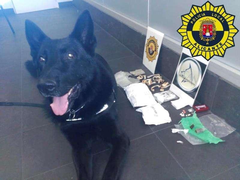 Foto cedida por la Policía Local de Alicante con el perro que detectó numerosas drogas en el equipaje de un hombre que viajaba de Algeciras a Barcelona.