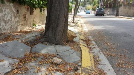 Imágenes de acera degradada en La Canyada por acción de los árboles y de la calle Villa de Madrid en Fuente del Jarro. FOTO: EPDA