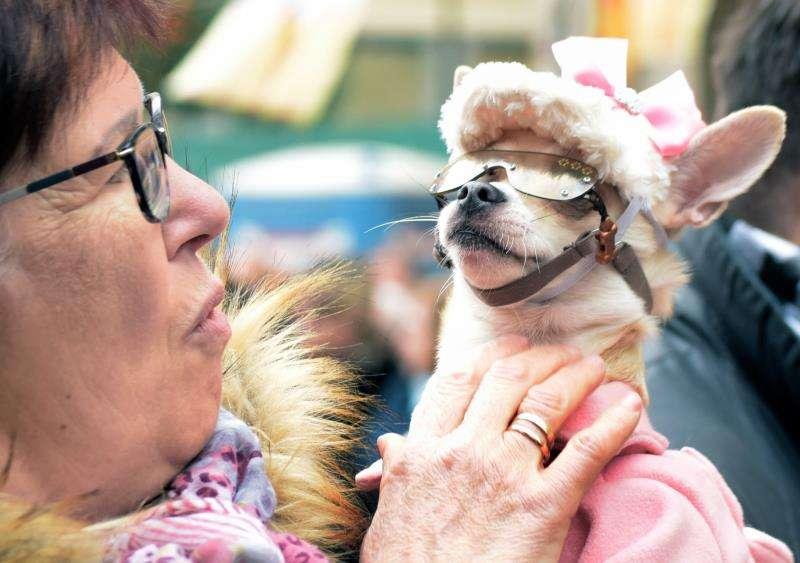 Una mujer con su perro durante la bendición de animales en la festividad de San Antonio Abad.EFE/ Jorge Gil