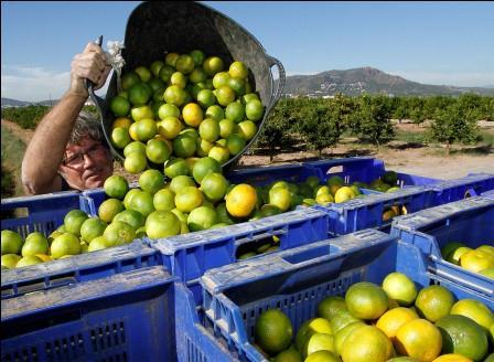 Arranca la campaña de la naranja de Copuzol. Foto: EPDA