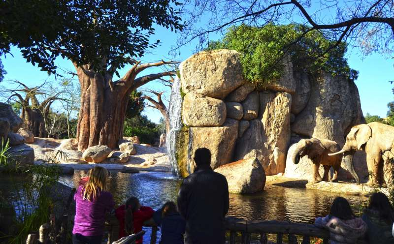 Visitantes en Bioparc este mes de enero.