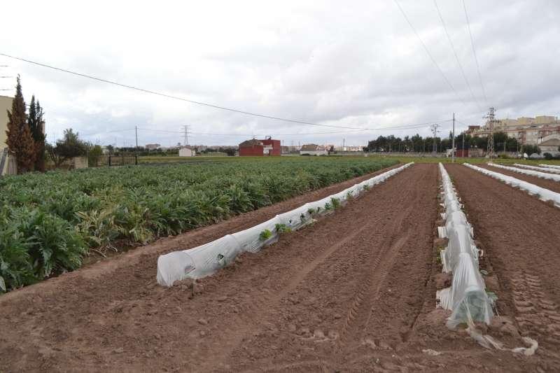 Imagen de uno de los campos de cultivo de la zona de Almàssera. EPDA