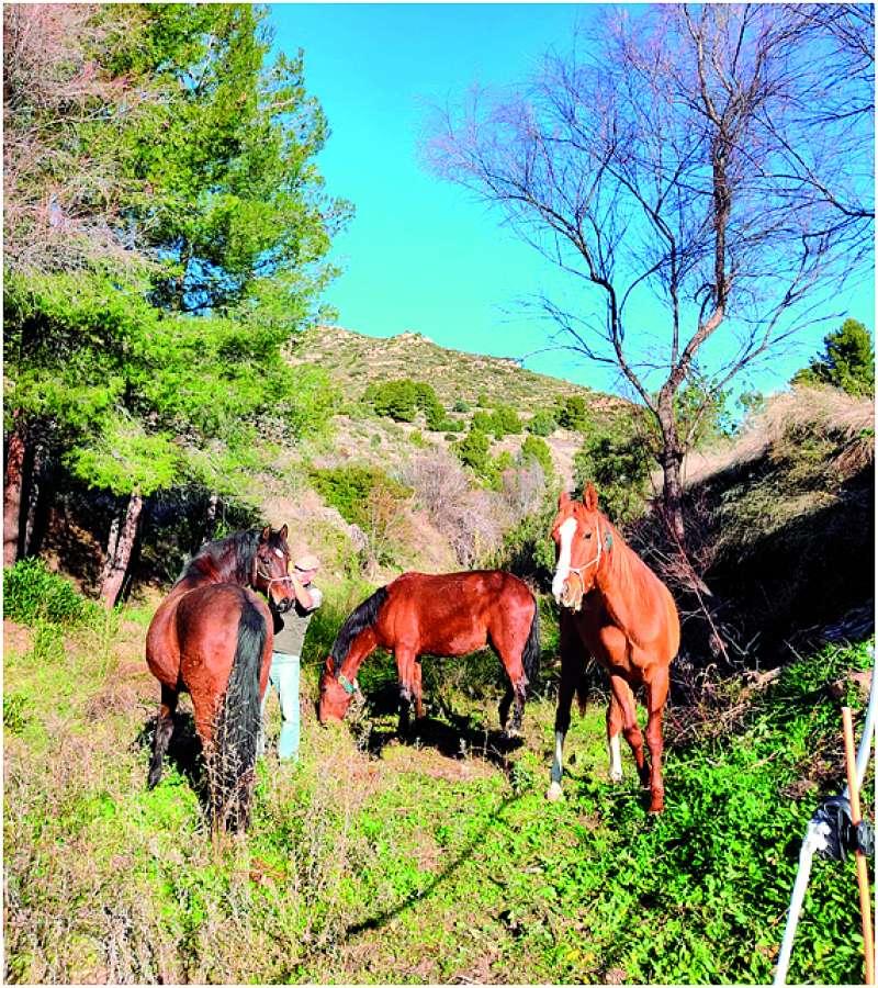 Caballos en el barranco de La Cava. / EPDA