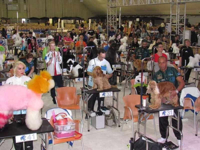 Competición Mundial de Peluquería Canina