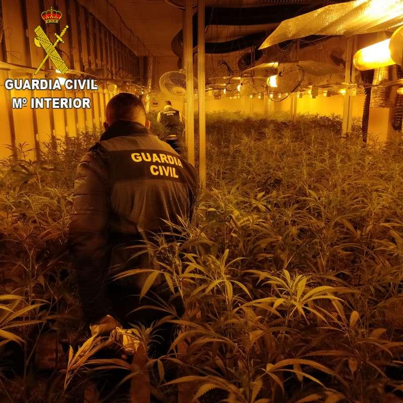 Cultivo marihuana encontrado en Oliva - EPDA