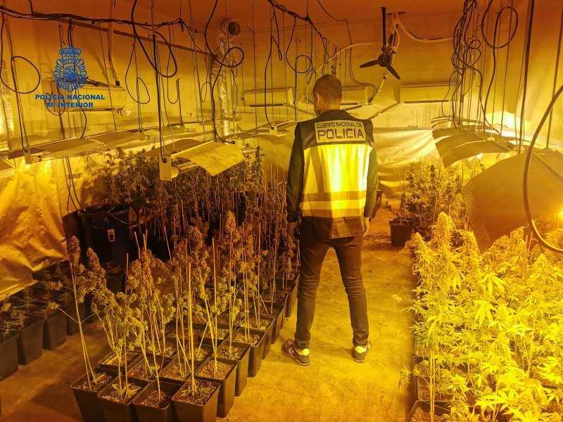 En los registros llevados a cabo en Valencia, Paterna y Catarroja, los policías localizaron 2323 plantas de marihuana.
