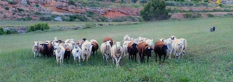Cabezas de ganado. / EPDA
