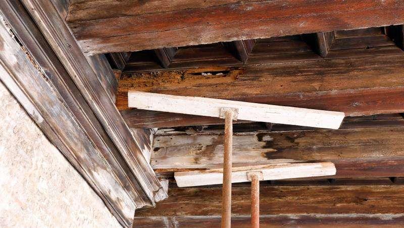 Detalle de las vigas de la techumbre renacentista de la Lonja de los Canónigos, del siglo XVI, sobre cuyo riesgo de