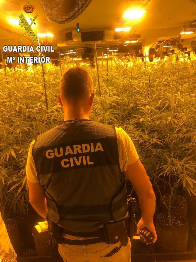 Plantación de marihuana. / EPDA