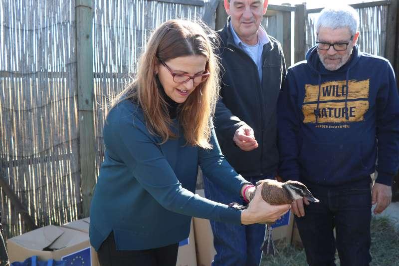 La consellera de Medio Ambiente soltando un pato en la Marjal dels Moros de Sagunt. EPDA