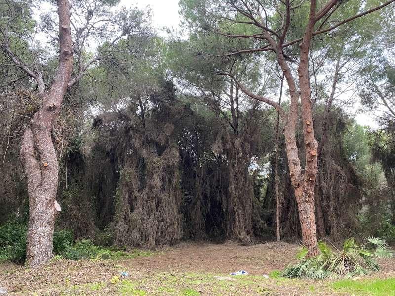 Paisaje natural de un bosque valenciano. EPDA.