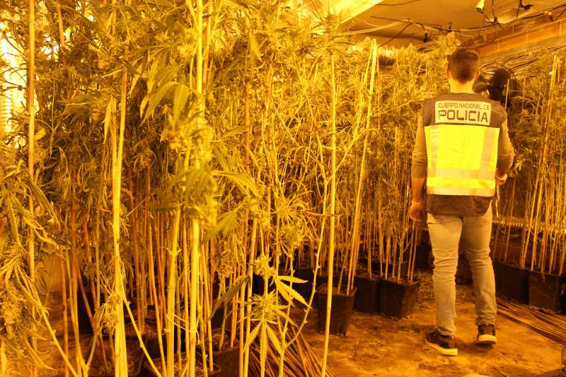Un agente de la Policía Nacional junto a las plantas de marihuana