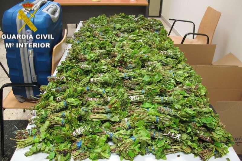 La Guardia Civil incauta alrededor de 43 kg de KHAT ocultos en dos maletas a un pasajero en el aeropuerto de Valencia