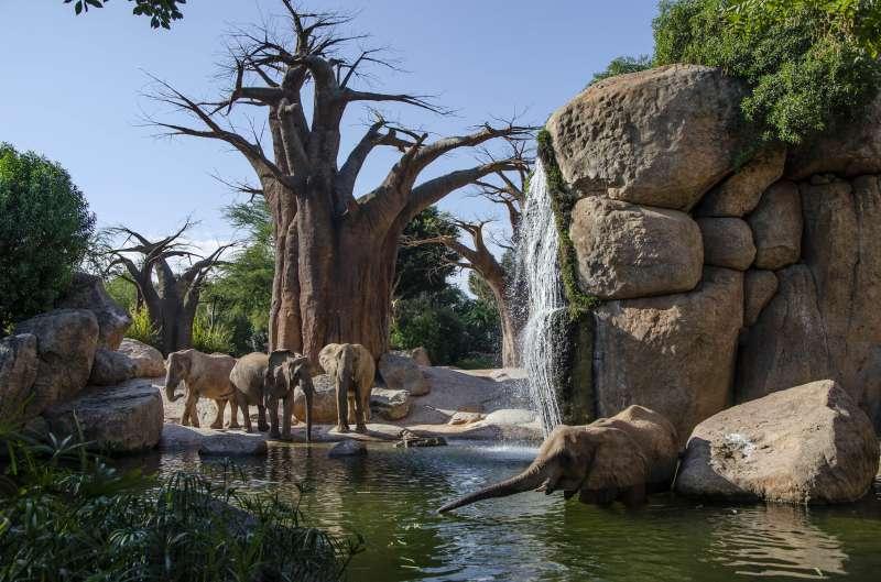 Manada de elefantes en BIOPARC Valencia