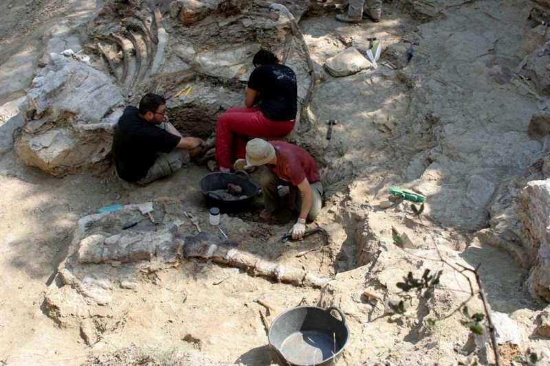 Imagen de archivo de paleontólogos limpiando restos encontrados en el yacimiento arqueológico de Morella, en este caso, un dinosaurio saurópodo que debió de vivir hace más de 120 millones de años. EFE/Domenech Castelló/Archivo