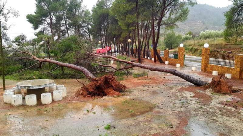 Árboles en La Mina de Castellnovo