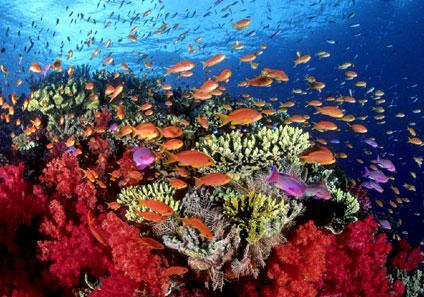 Los arrecifes de coral también juegan un papel muy importante en la economía turística del Caribe. FOTO: EPDA.