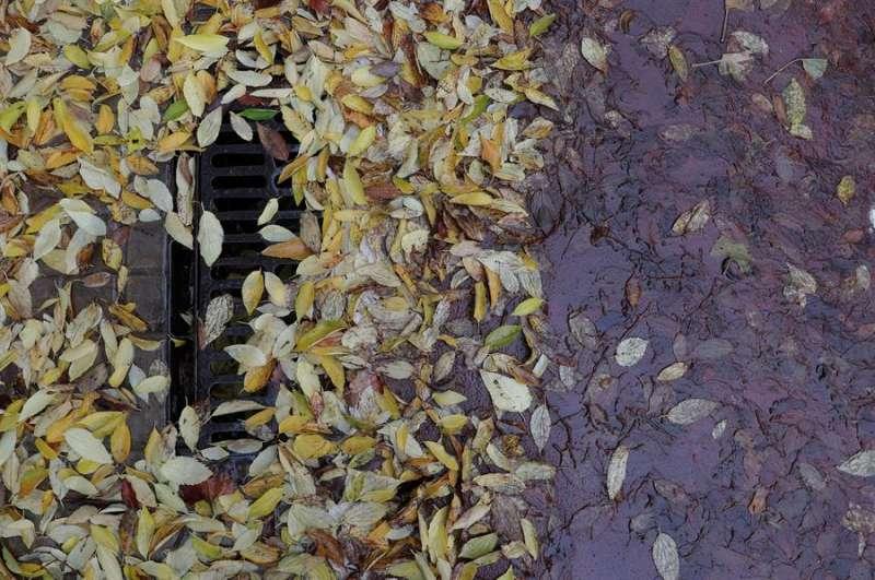 Detalle de una boca de alcantarilla rodeada de hojas arrastradas por el agua durante un temporal de lluvia. EFE/Kai Försterling/Archivo