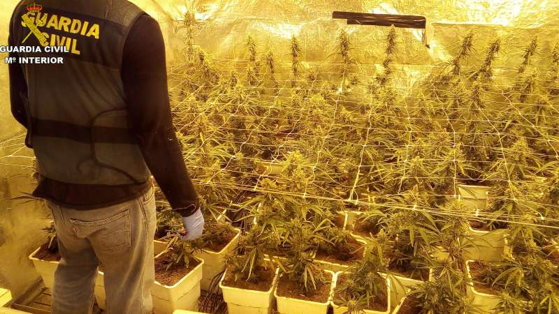 Plantación de Marihuana.FOTO GUARDIA CIVIL