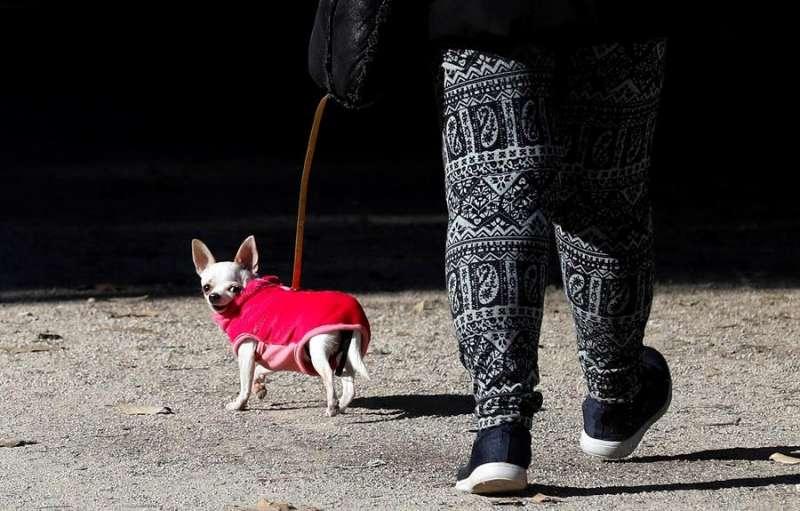 Una persona pasea a su perro, bien abrigado por la bajada de temperaturas. EFE